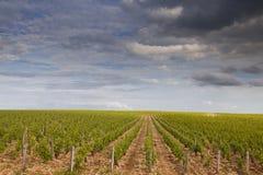 Stormy vineyards Stock Image