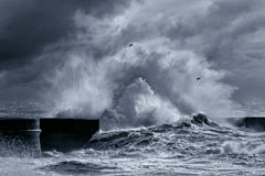 Stormy waves Stock Photography