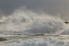 Stormy waves Stock Image
