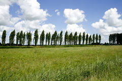 Stormy weather. Trees bending in stormy weather at border of a green meadow in the Netherlands royalty free stock images