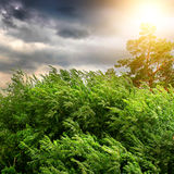 Stormy Weather. Nature Landscape with Windy Stormy Weather and the Sunlight stock photography