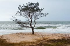 Stormy weather by the sea, lonely tree by the sea stock image