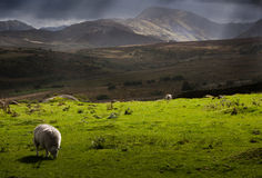 Stormy weather in Wales Stock Images