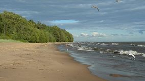 Seagulls fly over the sea. Stormy weather and waves rolling on the shore. The beautiful sky with clouds on the coast is deserted. Seagulls circling the shore stock video footage