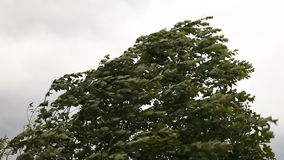 Stormy wind. Moving tree branches stock footage