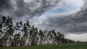 Stormy and windy day at the forest near village. Rain over pine trees stock video footage