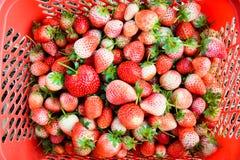 Storrsberrie in de mand Royalty-vrije Stock Afbeelding