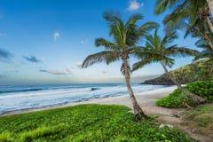 Storslagen ansestrand med palmträdet, Reunion Island royaltyfria foton