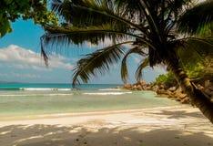 Storslagen Coco på den LaDigue ön i Seychellerna Royaltyfri Fotografi
