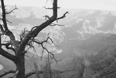 storslagen ensam tree för kanjon Royaltyfri Bild