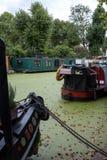 Storslagen facklig kanal på lilla Venedig, Paddington, London Vattnet täckas i gröna alger efter sommarheatwaven, 2018 arkivbild