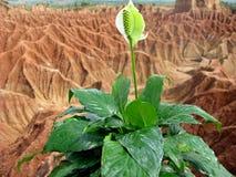 storslagen grön white för blomma Arkivbilder