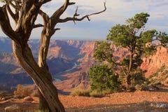 storslagen majestätisk utsikt för kanjonskymning Royaltyfri Fotografi