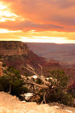 storslagen nationalpark USA för kanjon Arkivfoton