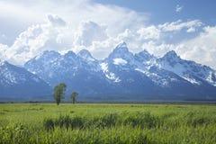 Storslagen Teton bergskedja ovanför gräs- fält i Wyoming Royaltyfria Bilder