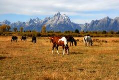 Storslagen Teton hästranch Arkivfoton