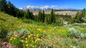 Storslagen Teton nationalpark arkivfilmer