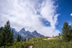 Storslagen Teton nationalpark, träd och ett öppet fält Arkivfoto