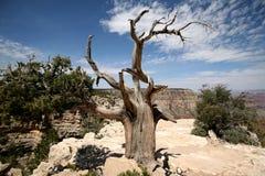 storslagen tree USA för arizona kanjon Fotografering för Bildbyråer