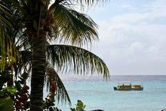 Storslagen turk, turker och Caicos Royaltyfri Bild