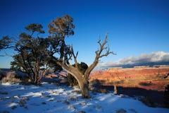 storslagen vinter för kanjon Arkivfoto