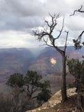 Storslaget träd royaltyfria foton