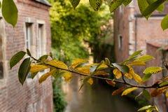 Storslagna Beguinage i Leuven _ Arkivfoto