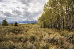 Storslagna Teton i vinter royaltyfri fotografi