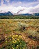Storslagna Teton, Wyoming Arkivbilder
