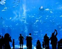 Stort akvarium fotografering för bildbyråer