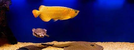 Lyxigt akvarium Fotografering för Bildbyråer