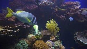 Stort akvarium och fisk som svävar i den stock video