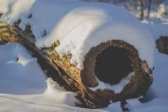 Stort belopp av snö på en träklippt trädfilial i en skog royaltyfri fotografi
