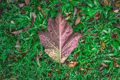 Stort blad på naturlig bakgrund för gräsfält Arkivbild