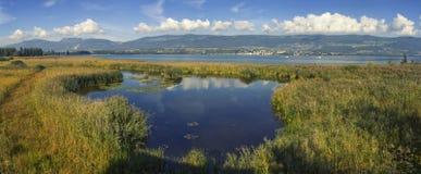 Stort Caricaie naturligt djurliv parkerar, Neuchatel sjön, Schweiz arkivfoto