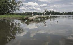 Stort dött träd på land och i floden Royaltyfria Bilder