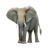 Elefant stor vuxen asiatisk elefant. Arkivbild