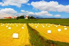 Stort fält med höstackar Arkivfoton