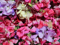 Stort färgrikt val av blommor för söt ärta Arkivfoton