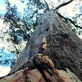 Stort gammalt träd i det Avila berget Royaltyfria Foton