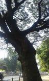 stort ge sig för träd som är trevligt, poserar för att klicka Fotografering för Bildbyråer