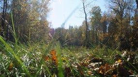 Stort gräs Royaltyfria Bilder