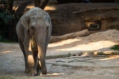 Stort grått djurt stående framme av träd Arkivfoto