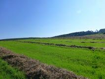 Stort grönt fält med långa bruna band av hö Arkivfoto