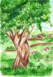 Stort grönt träd för vattenfärg i bylandskap Royaltyfri Foto