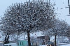Stort härligt träd dubbad snö Vinter Frost på gatan Arkivbild