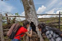 Stort hål i trädet Grupp av turister som hitching en ritt Royaltyfri Foto