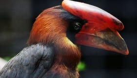 Stort huvud av papegojan Royaltyfri Foto