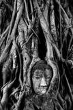 Stort huvud buddha Royaltyfria Bilder