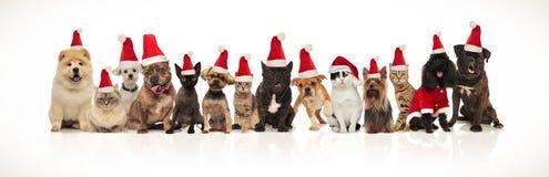 Stort jullag av många gullig katter och hundkapplöpning arkivbild